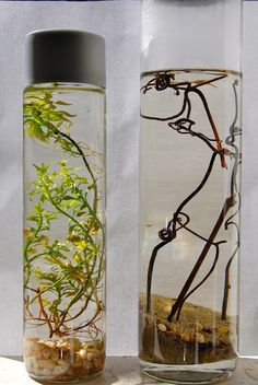Self contained ecosystem in a bottle! This is a great idea for a lab in the science classroom. AKD