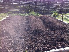 Potatoes in the ground...