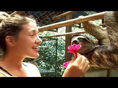 She Offered This Sloth A Treat, But He Wanted Something Else