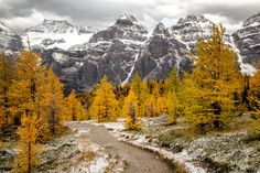 Are you looking for inspiration for your next day hike in the Canadian Rockies? See my ten favorite day hikes across Canada's most scenic national parks. Larch Tree, Hiking Photography, Travel Oklahoma, Canadian Rockies, Day Hike, New York Travel, Canada Travel, Thailand Travel, Tourism