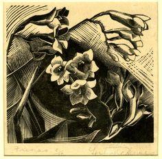 Gertrude Hermes (British, 1901-1983). Fresias. 1926. (wood engraving)