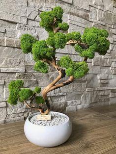 Ikebana, Moss Decor, Moss Art, Tree Art, Artificial Flowers, Bonsai, Fun Crafts, Planter Pots, Natural