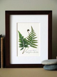Pressed fern print, x matted, Wood fern, green woodland ferns, botanical no. Wood Fern, Pressed Flower Art, How To Preserve Flowers, Flower Crafts, Botanical Prints, Ferns, Flower Decorations, Dried Flowers, Canvas Wall Art