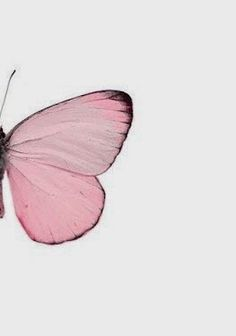 Image uploaded by The Butterfly. Find images and videos about photography, pink and butterfly on We Heart It - the app to get lost in what you love. Pink Love, Pale Pink, Pretty In Pink, Pink Color, Colour, Color Rosa, Pink White, Butterfly Kisses, Pink Butterfly