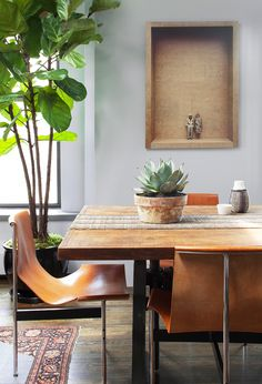 Rustic yet modern dining space with cactus on table and indoor plant to the side