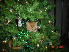 pic 113 shot 9.  George, our cat rang-in the New Year by climbing into the Christmas Tree, lol.  Hannelies had gone back home and missed ringing-in the New Year with us. 2009