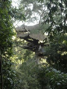 I still dream of living in the Swiss Family Robinson's treehouse that used to be in Disneyland. My absolute favorite place there. Sad it's gone.