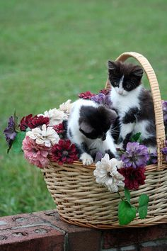 cute kittens in a basket with flowers