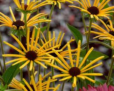 Planting, Flowers, Delivery, Colour, Google, Shade Perennials, Garten, Photo Illustration, Color