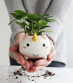 #unicorn  #vase  https://preis-king.com/product/unicorn-vase/