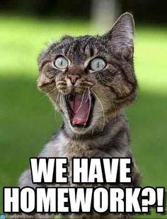 We Have Homework?! - Screaming Cat meme on Memegen