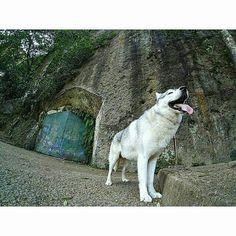Such a lonely dog in a stranded place #yicambandung #bandung #bandungjuara #GuaBelanda