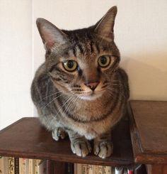 猫は新し物好き作業好き 新しい居場所発見 by cos96