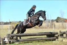 Highland Blue Diamond - Irish Sport Horse - Horsezone
