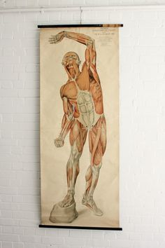 Early+20th+Century+Anatomical+Chart+By+Frank+Frohse+