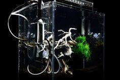 2 | The Bonsai Reborn As An Entrancing, Underwater Chia Pet | Co.Design: business + innovation + design
