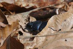 Bug - Käfer