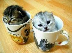 tea cut kitties