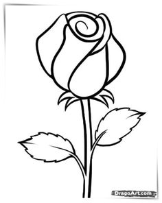 Simple rose drawing how to draw morning glory flower step by step drawing tutorial do you . Flower Drawings With Color, Easy Flower Drawings, Flower Sketches, Easy Drawings, Drawing Flowers, Pencil Drawings, Simple Rose, Simple Flowers, Easy Rose