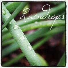 My Word with Douglas E. Welch » Photo: Raindrops from A Gardener's Notebook with Douglas E. Welch via Instagram