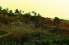 Lots of flowers. Near Kona, Hawaii.