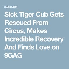 Sick Tiger Cub Gets Rescued From Circus, Makes Incredible Recovery And Finds Love on 9GAG