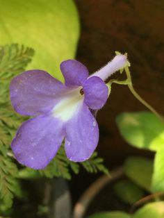 Flower Nonthaburi, Thailand