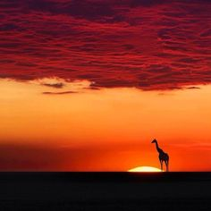 Beautiful sunset, Africa. Love the giraffe in profile against the setting sun. Simply breathtaking.