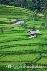 Image result for bali indonesia