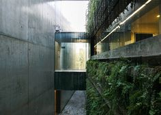 Folded concrete cultural centre in Brazil hides a plant-lined gully behind its exterior