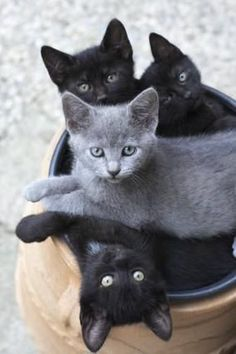 How delightful! It's not every day you see four gorgeous kitties in a plant pot.