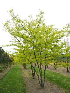 Trees And Shrubs, Trees To Plant, Outdoor Plants, Outdoor Gardens, Farm Landscaping, Jungle Gardens, Victorian Gardens, Garden Deco, Contemporary Garden