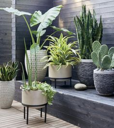 Outdoor plants + planters