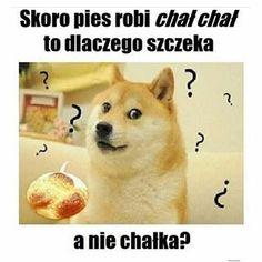 Też mnie to zastanawia. Very Funny Memes, Wtf Funny, Funny Jokes, Polish Memes, Instagram Marketing Tips, Lol, Reaction Pictures, Shiba Inu, Man Humor