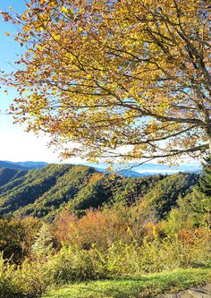 Fall color in the Great Smoky Mountains National Park at Newfound Gap. See our fall color reports for Asheville: https://www.romanticasheville.com/fall-color-report