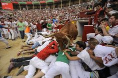 Pamplona bull runners are squashed as they try to photograph ...
