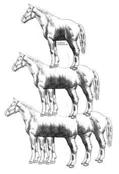 Paard, paarder, paardst
