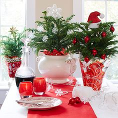 Prepare for Winter with Norfolk Island Pine Trees. c.