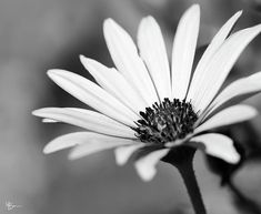 Black And White Picture Wall, Black And White Flowers, Black And White Wallpaper, Black And White Portraits, Photo Black, Black And White Pictures, Black And White Photography, White White, Texture Photography