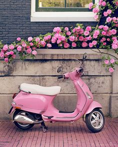 Europe Photography Pink Scooter and Roses Fine by GeorgiannaLane