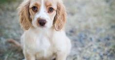 Image result for brittany dog tumblr
