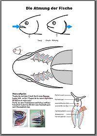 Unterrichtseinheiten zum Thema Fische