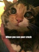 funny cat memes: cute kitty big eyes: when you see your crush.
