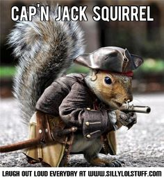 Capt Jack Squirrel_meme