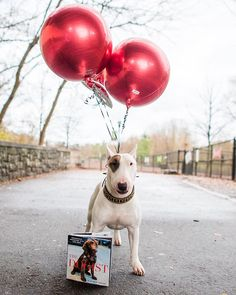 Congratulations to Penny winner of The Dogist Book Sweepstakes! Stay tuned for more images from her photo shoot in Atlanta GA #thedogistbook by: @thedogist