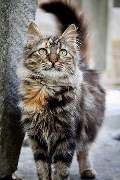 Such a pretty kitty.