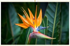 Bird of Paradise Flower Canvas Print Floral Wall Art Flowers Home Decor Flower Poster Gift For Wife Girlfriend 3 4 5 Panel Tropical Wall Art by NewMediaCanvas on Etsy Orange Flowers, Tropical Flowers, Hibiscus, Tatton Park Flower Show, Paradis Tropical, African Lily, Mexican Flowers, Birds Of Paradise Flower, Unusual Flowers