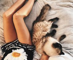 getting the daily kitty snuggles and like OMG! get some yourself some pawtastic adorable cat apparel! Cat Boarding, Cute Little Animals, Cute Creatures, Cool Cats, Cats And Kittens, Fur Babies, Funny Cats, Cat Lovers, Dog Cat