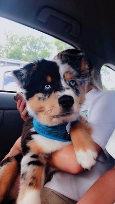 160 Best Puppy Names The Paws is part of Cute animals - Super Cute Puppies, Cute Baby Dogs, Cute Dogs And Puppies, Cute Babies, Doggies, Small Puppies, Puppies Puppies, Cute Puppy Pics, Aussie Puppies