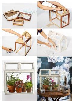 Terrario con marco de fotos